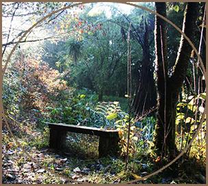 Bench on Bush Walk around Kawai Purapura
