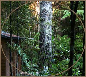 Bush Walks around Kawai Purapura