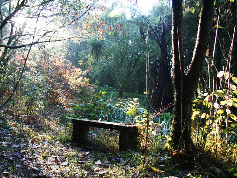 New Zealand Bush Walk to a Bench