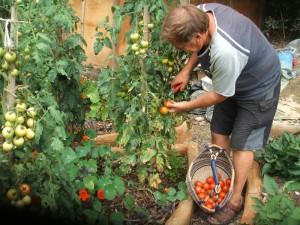 kawaipurapura-residential-accommodation-gardening
